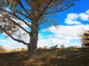 4th Jun 2021 - Benched Tree