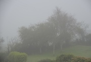 10th Jun 2021 - Trees in the mist!