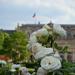 roses in Palais Royal garden