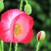 Garden Delight by seattlite
