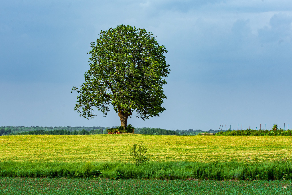 The Old Stump Tree by farmreporter