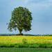 The Old Stump Tree