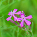 Macro wild flowers...