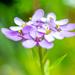 Tiny flowers...