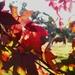 Autumn colours....