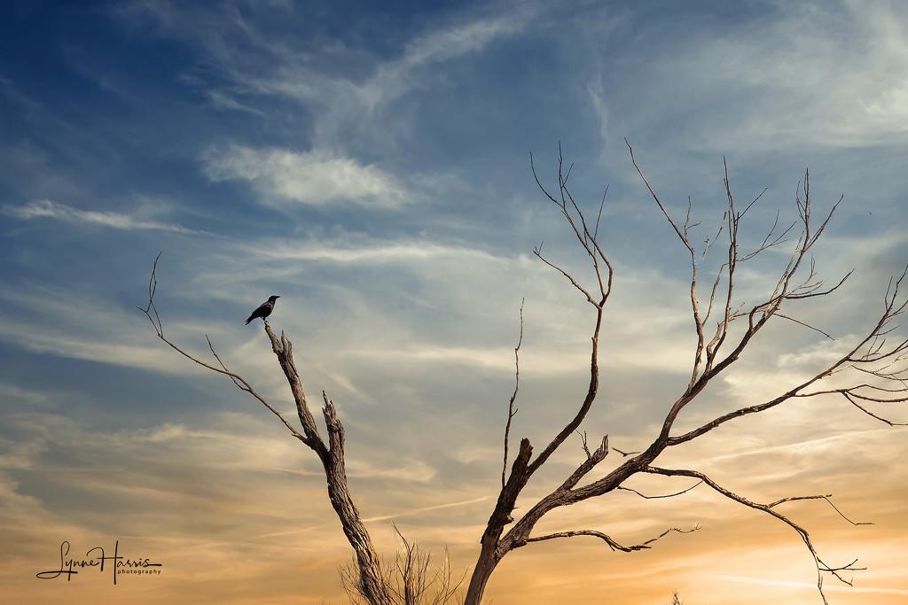 Bird on a Limb by lynne5477