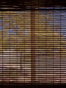 22nd May 2021 - Bamboo shade