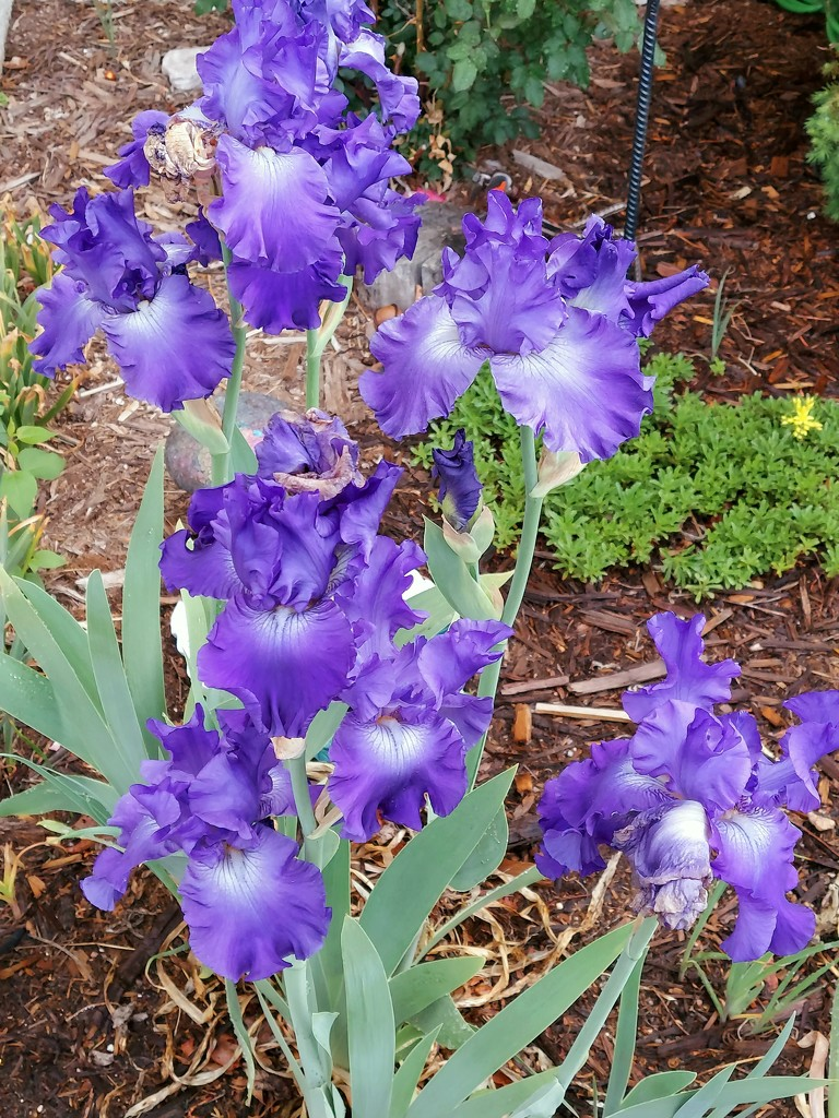 Purple Power by harbie