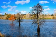 6th Jun 2021 - Three trees in lagoon