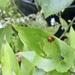 Ladybird action
