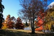 8th Jun 2021 - Trees of Autumn