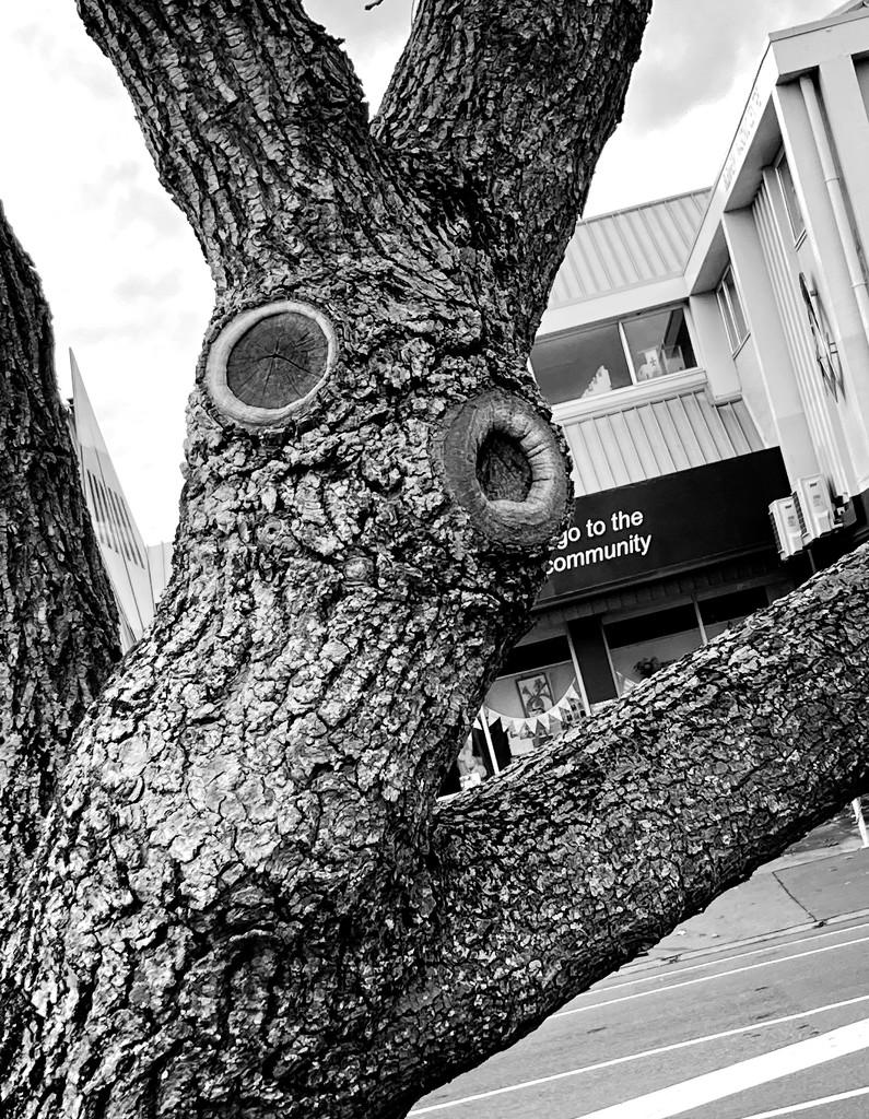 A tree for the community by kiwinanna
