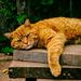 Hugo Sunbathing
