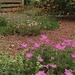 Front garden meadow