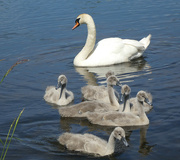 9th Jun 2021 - Family Outing.