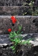 11th Jun 2021 - Poppy on steps