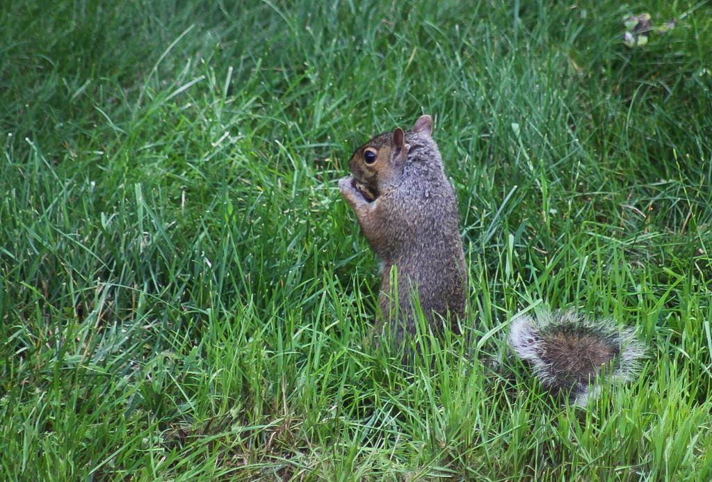 Squirrel by mittens
