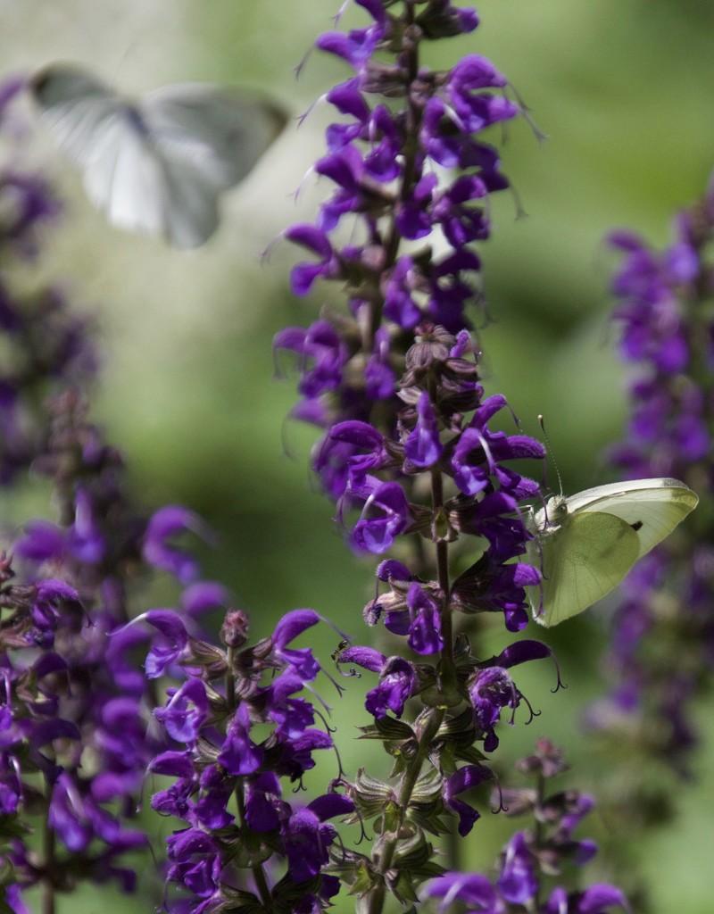 Butterfly Dreams by mzzhope