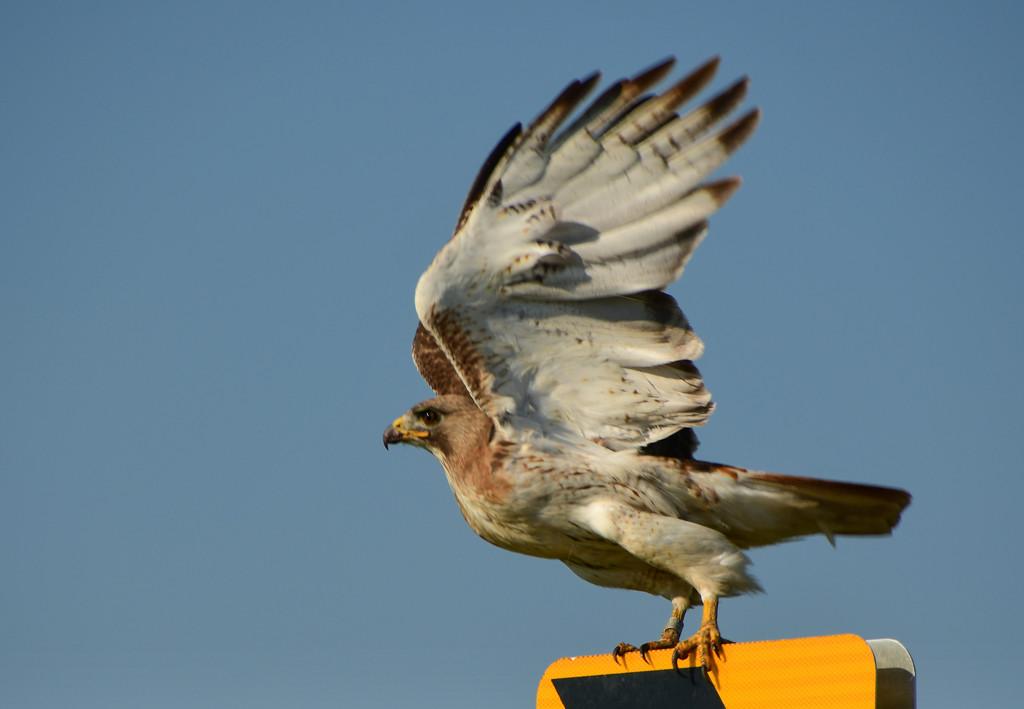 Lift those Wings by kareenking