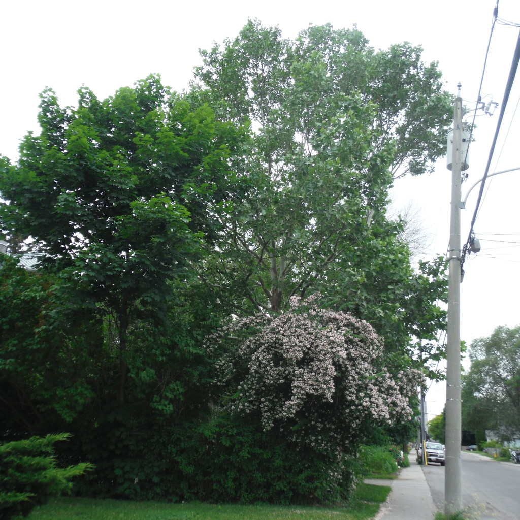 Tree and Flowering Bush by spanishliz