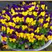 a bowl full of violets