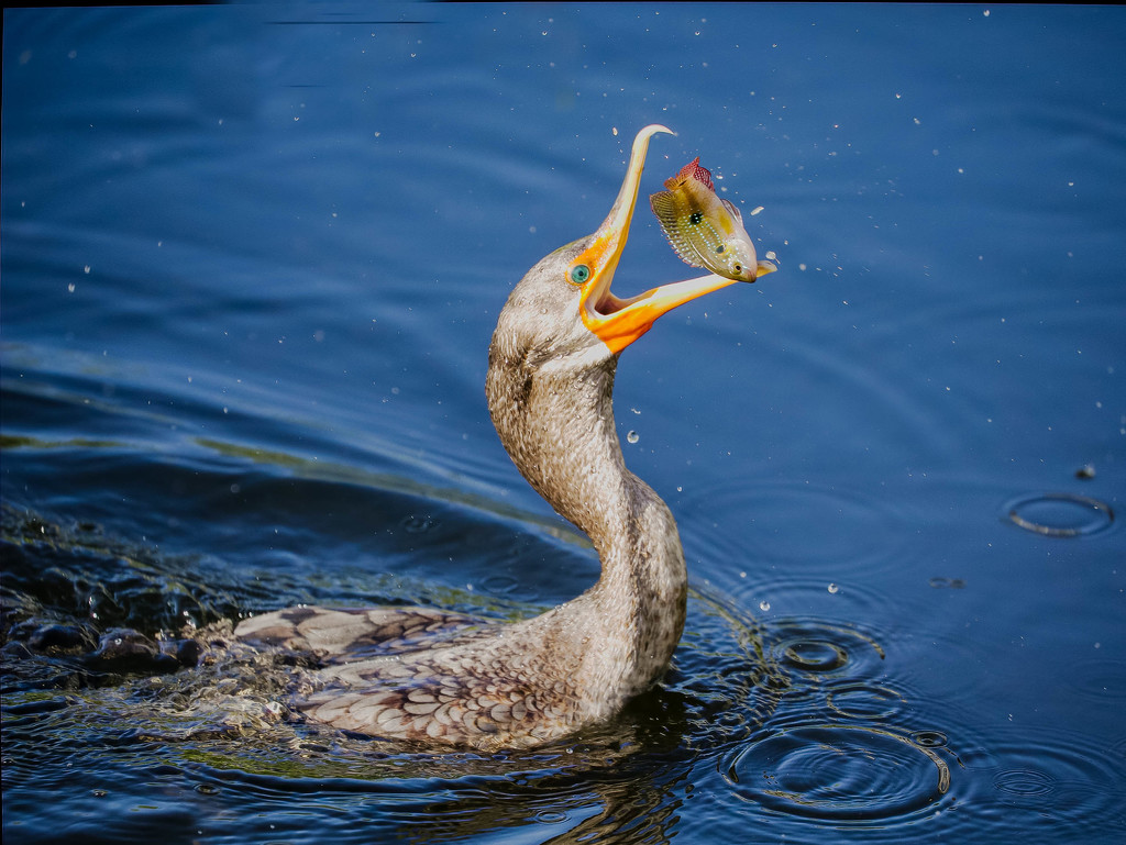 Fish for breakfast  by dutchothotmailcom