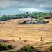 A farm in Africa