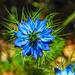 Blue by sherimiya
