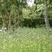 Another RHS partner garden to explore