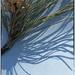 Pine patterns by joysabin