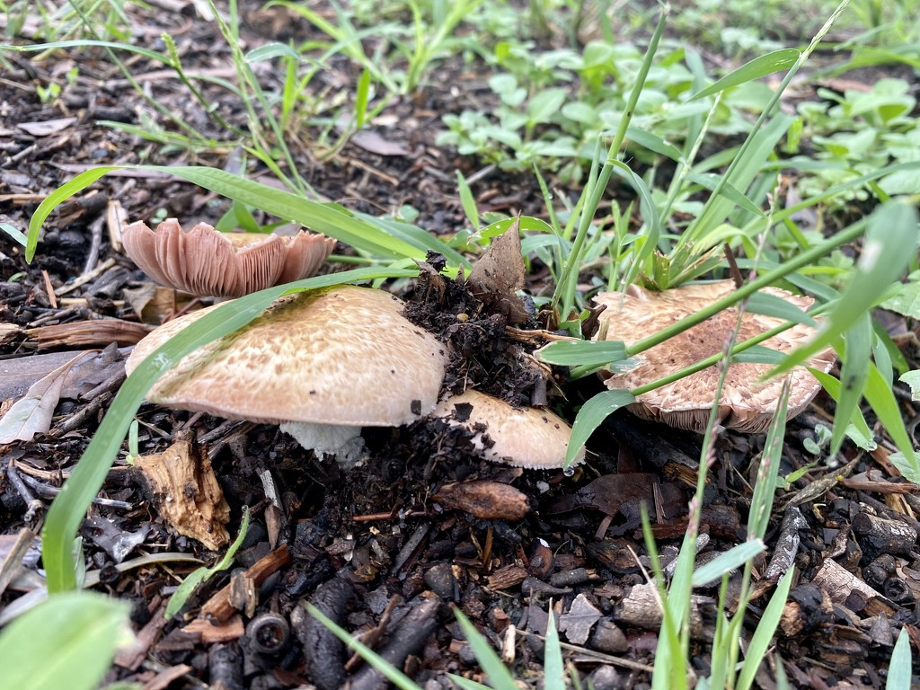 Mushroooooms by sugarmuser
