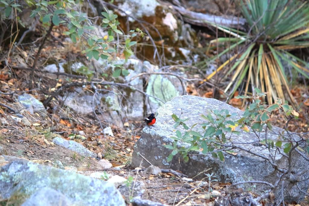 Tiny birdie by blueberry1222