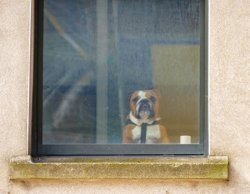 watchdog by cam365pix