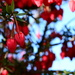 Lantern tree.........