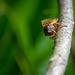 Cicadas Brood X 2021 Eye Spy