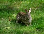 13th Jun 2021 - Hi again rabbit.....