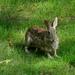 Hi again rabbit.....