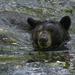 Maymont - Black Bear by timerskine