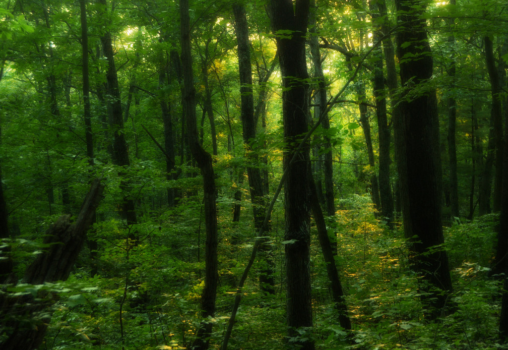 Forest in the evening by francoise