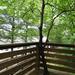 A tree through a deck