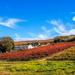 Colouful vineyards by ludwigsdiana
