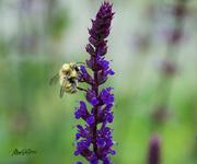 13th Jun 2021 - ~Buzy Bee~