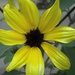 Yellow flower by mittens