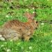 Well-Fed Bunny