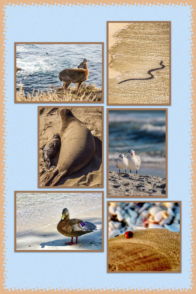 Animals at the Beach by mzzhope