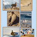 Animals at the Beach