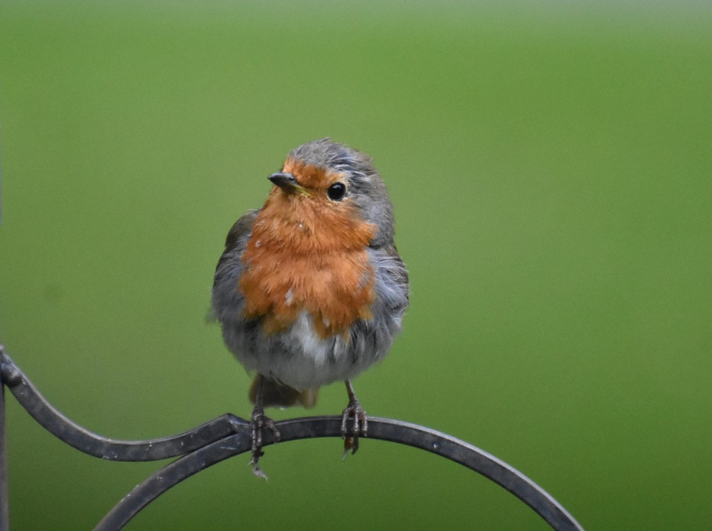 Robbie - what a poser by rosiekind