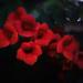 Campsis flower by evgeniamsk