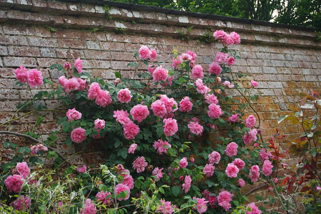 in the walled garden.. by quietpurplehaze