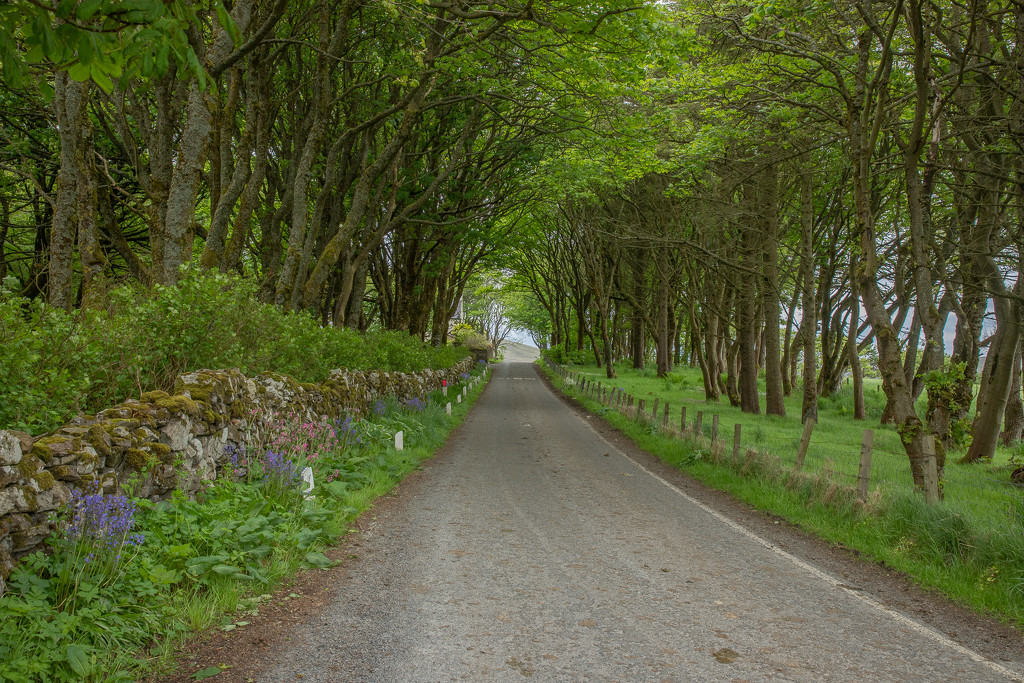Shetland Trees by lifeat60degrees